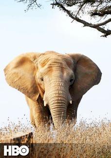 W obronie słoni